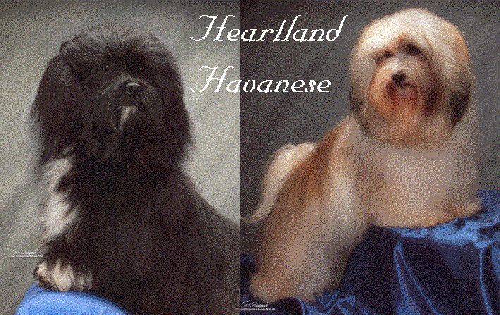 Welcome to HEARTLAND HAVANESE