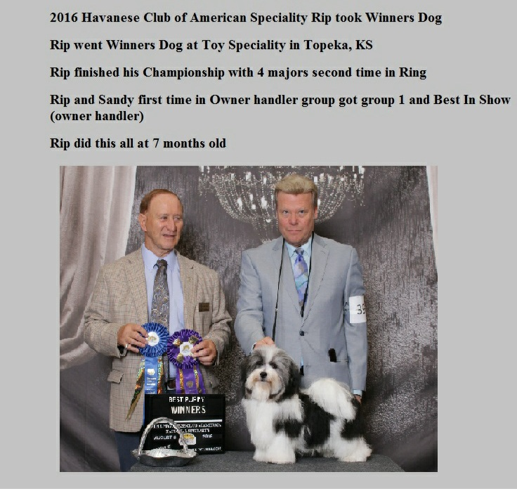 Rip took Winners Dog and Best Puppy at 2016 havanese nationals